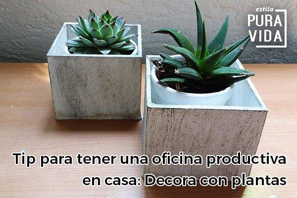 Usa plantas para hacer tu oficina más productiva y alegre